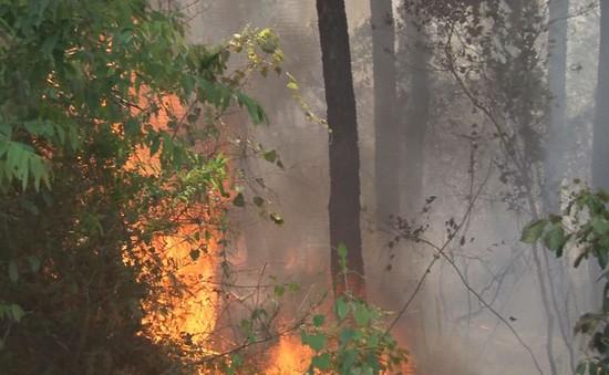 Thừa Thiên Huế: Huy động nhiều lực lượng cứu rừng thông đang bị cháy