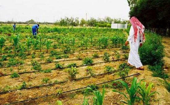 Qatar hướng tới tự cung, tự cấp lương thực