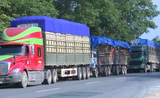 Quảng Trị: Xe quá khổ chở dăm gỗ hoành hành trên tuyến Quốc lộ 9