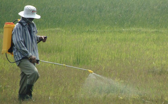Mùa phun thuốc diệt cỏ: Mùa của những hiểm họa