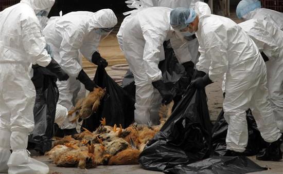 WHO khuyến cáo Việt Nam cảnh giác cao với cúm A/H5N8 lây sang người