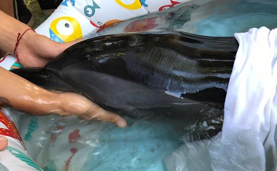 Cứu hộ cá heo trên bãi biển Đà Nẵng