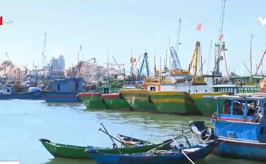 Nhiều tàu cá Bình Định không bật định vị khi khai thác