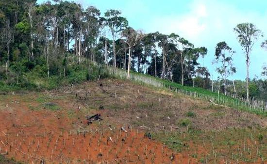 Thanh tra công tác quản lý, sử dụng đất nông, lâm nghiệp tại Đắk Nông