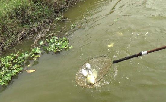 Tử vong do dùng kích điện cá