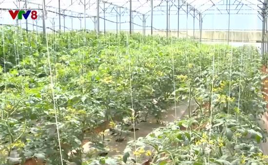 Mua rau tại vườn - Xu hướng tiêu dùng nâng cao trách nhiệm người sản xuất