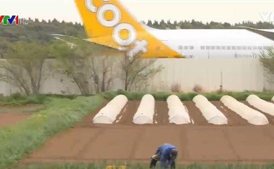 Nông nghiệp hữu cơ Nhật Bản ít được quan tâm