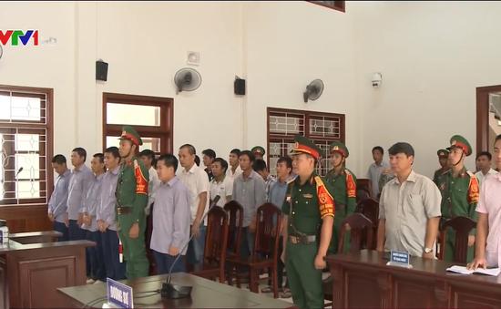 Tuyên án vụ phá rừng pơ mu Quảng Nam