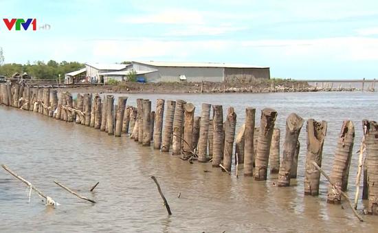 Đê biển Tây sạt lở nghiêm trọng, đe dọa cuộc sống hàng trăm hộ dân