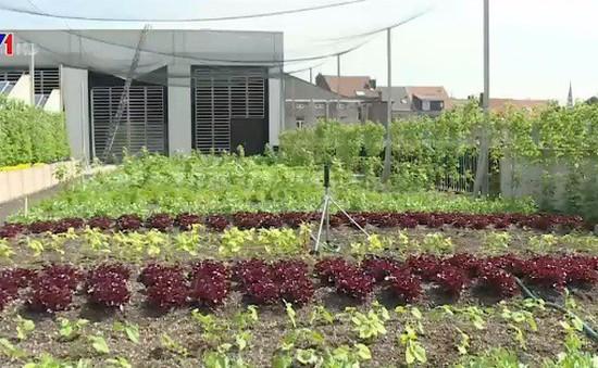 Thúc đẩy việc trồng và tiêu thụ rau sạch tại Bỉ