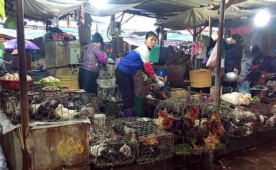 Nhiều nguy cơ tiềm ẩn từ việc buôn bán, giết mổ gia cầm sống tại chợ