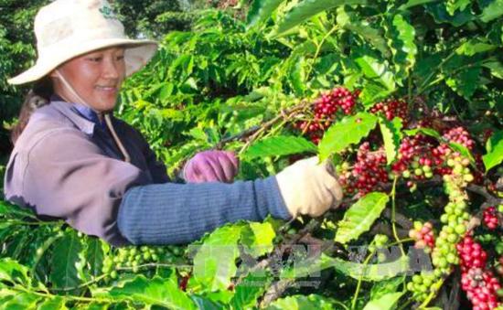 Hiệu quả từ việc hỗ trợ phát triển sản phẩm công nghiệp nông thôn