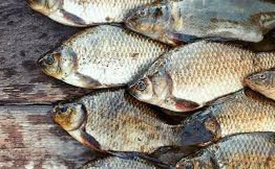 Cá: nguồn dinh dưỡng chính của người dân Scandinavia thời kỳ đồ đá