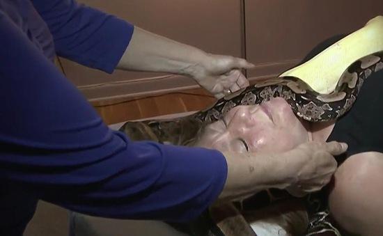 Massage bằng rắn ở New York, Mỹ