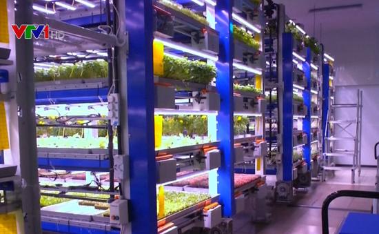 Mô hình trang trại thẳng đứng ở Dubai