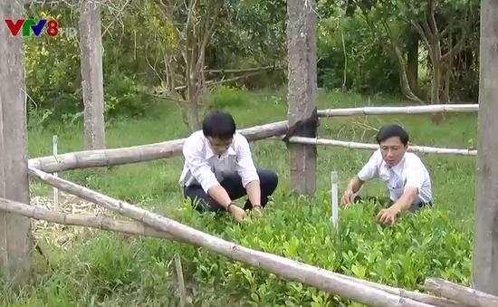 Hướng đến nền nông nghiệp xanh