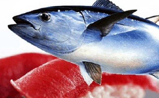 Nghiên cứu về mắt cá mở ra cách chữa sỏi thận và bệnh gout