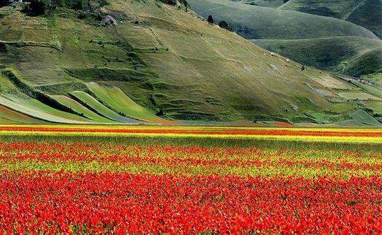Quyến rũ thảm hoa khổng lồ tại Umbria, Italy