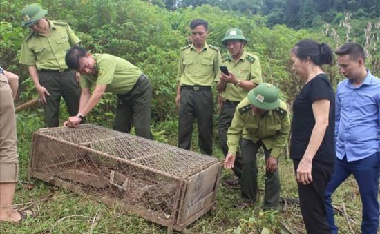 Thả cá thể trăn gấm trên 30kg vào rừng