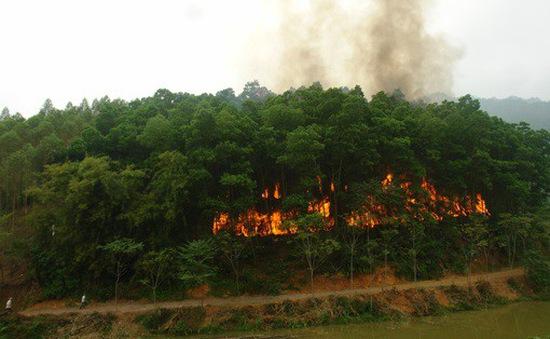 Nguy cơ cháy rừng ở mức cao nhất