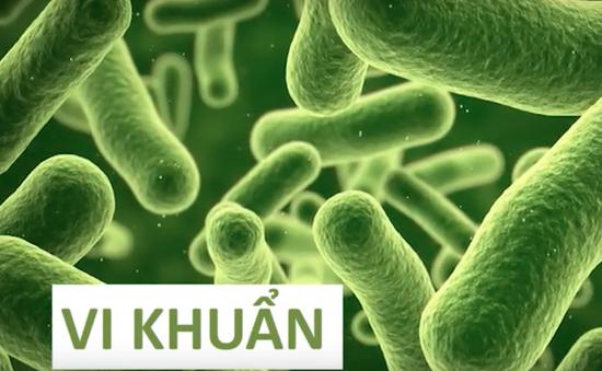 Chuyến đi màu xanh: Câu chuyện của vi khuẩn và nông nghiệp sạch