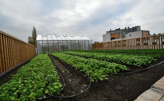 Siêu thị Delhaize, Bỉ trồng rau ngay trên... nóc nhà