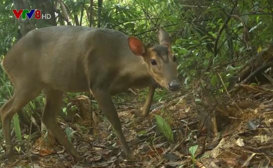 Báo động tình trạng săn bắn động vật hoang dã quý hiếm
