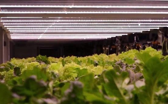 Mô hình phát triển nông nghiệp đặc biệt tại Dubai