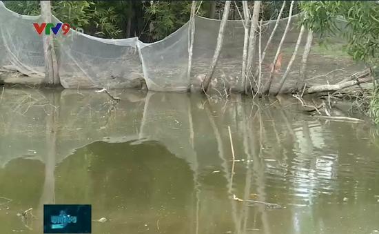 Người dân Long An sống trong cảnh ngập úng, ruồi muỗi vì dự án lấp rạch