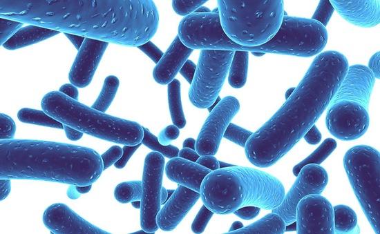 Vi khuẩn đường ruột có thể làm cho việc giảm cân khó khăn hơn