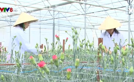 Đào tạo nhân lực cho nông nghiệp công nghệ cao