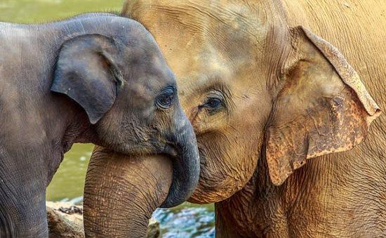 Phát hiện loại gen ở voi giúp mở ra hướng mới chữa ung thư ở người