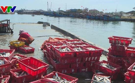 Thừa Thiên Huế được mùa vụ cá Nam