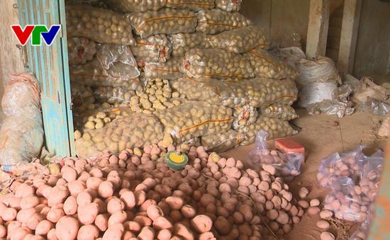 123 tấn khoai tây Trung Quốc tại Chợ nông sản: Đà Lạt gia hạn đến cuối tháng 9 chuyển khỏi chợ