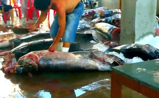 Tiêu điểm: Đấu giá hải sản nâng cao giá trị đánh bắt