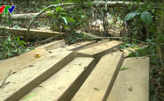 Chủ tịch UBND Bình Định chỉ đạo công an điều tra vụ phá rừng Vĩnh Thạnh