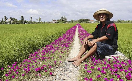 Trồng hoa dọc con đường: Độc đáo đường hoa mười giờ giữa đồng lúa ...