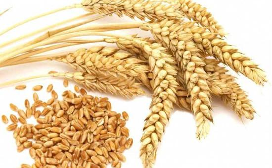 Lúa mạch, yến mạch giúp ngừa tiểu đường loại 2