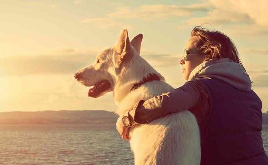 Cảm động câu chuyện những chú chó trung thành nhất thế giới