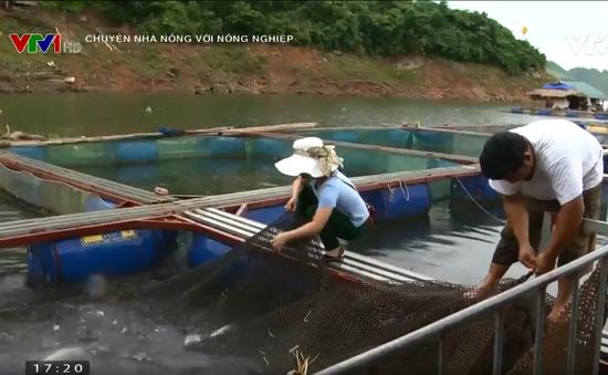 Chuyện nhà nông với nông nghiệp: Hiệu quả từ mô hình nuôi cá lồng ở Quỳnh Nhai