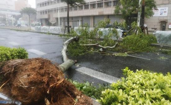 Ít nhất 17 người bị thương do bão Trami