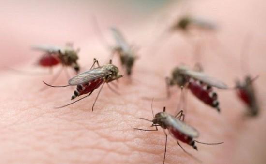 Công nghệ chỉnh sửa gen giúp ngăn chặn muỗi sốt rét sinh sản