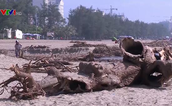 Sau mưa lũ, bãi biển Sầm Sơn ngập thân cây, củi gỗ