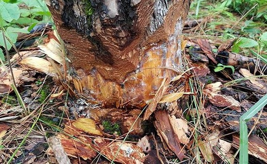 Tạm đình chỉ công tác cán bộ để xảy ra phá rừng phòng hộ Phi Liêng, Lâm Đồng