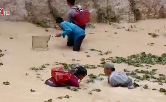 Bà Rịa - Vũng Tàu: Vỡ đập do mưa lớn, người dân mất trắng 300 tấn cá