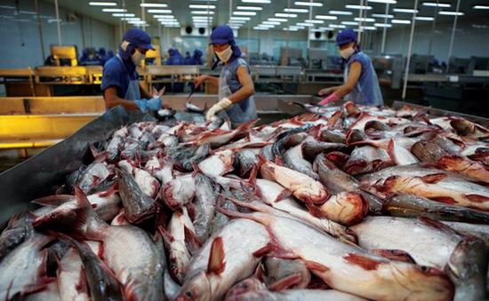 Năm 2017 - Năm khởi sắc của ngành cá tra Việt