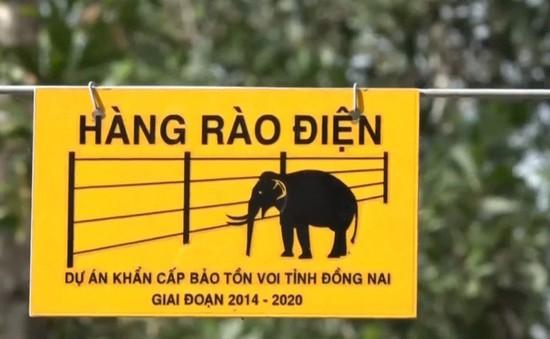 Hàng rào điện ngăn voi rừng đầu tiên của Việt Nam