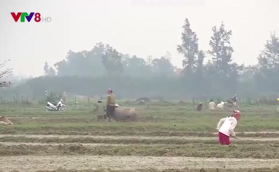 Nông dân Quảng Bình khẩn trương gieo cấy vụ Đông Xuân