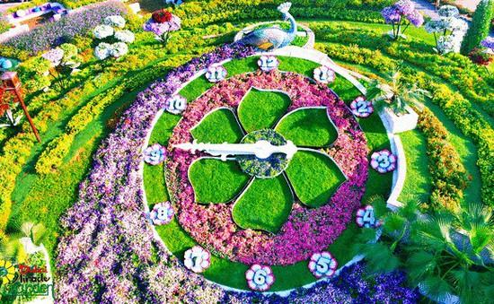 Vườn hoa khổng lồ giữa... sa mạc Trung Đông