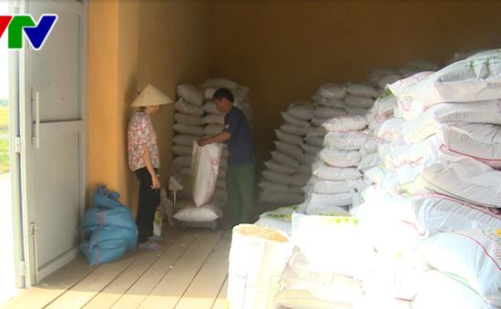 Phú Yên phân bổ 180 tấn giống để người dân khôi phục sản xuất